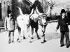 Gazdovia s kedysi u nás rozšíreným plemenom dobyta - uhorským stepným dobytkom